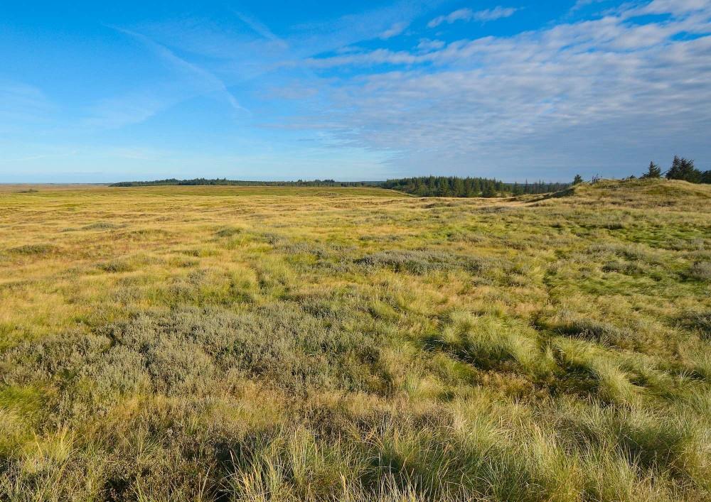 Udsigt mod nordvest fra Isbjerg, Nationalpark Thy (foto: Rune Engelbreth Larsen)