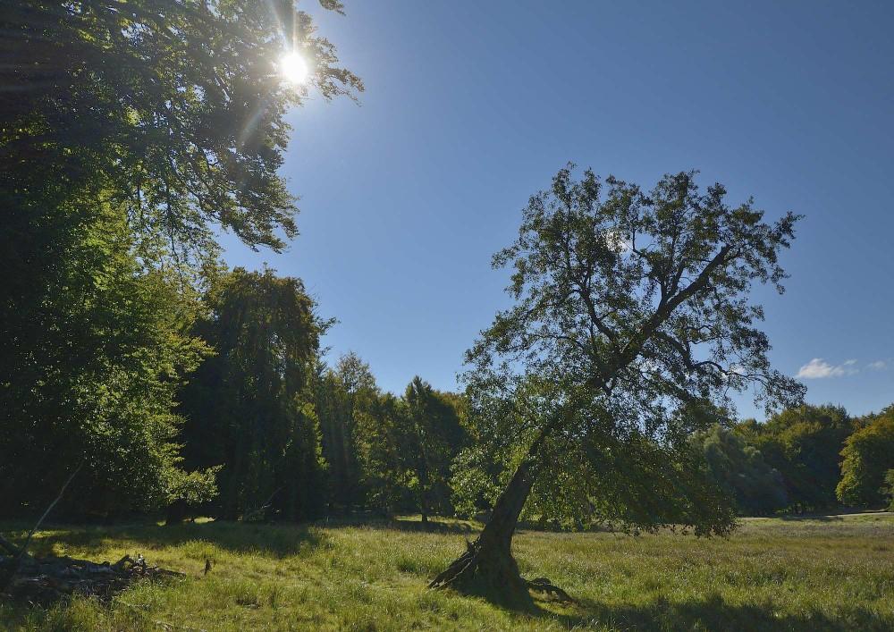 Jægersborg Dyrehave er trods en status som 'dyrepark' fuld af åbne skovlandskaber, der er mere naturlige end langt hovedparten af de danske produktionsskove (foto: Rune Engelbreth Larsen)