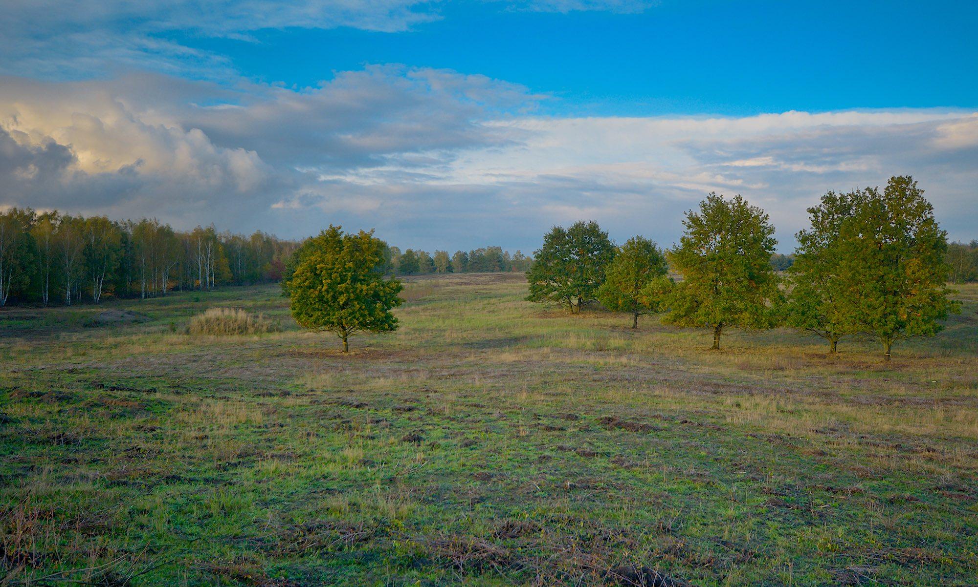 Döberitzer Heide i den nordøstlige ende af det knap 50 kvadratkilometer store naturområde (foto: Rune Engelbreth Larsen)