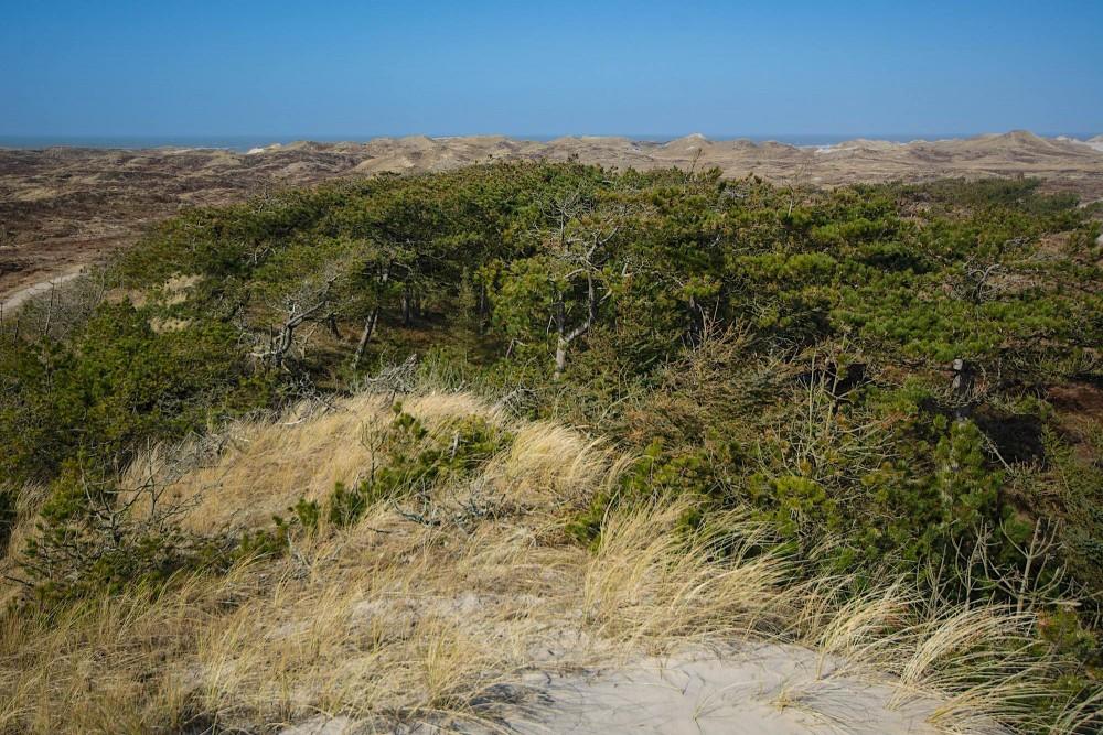 Udsigt fra Marens Maw ('Marens mave') på kanten mellem Husby Klitplantage og Husby Klit og med Vesterhavet i horisonten (foto: Rune Engelbreth Larsen)