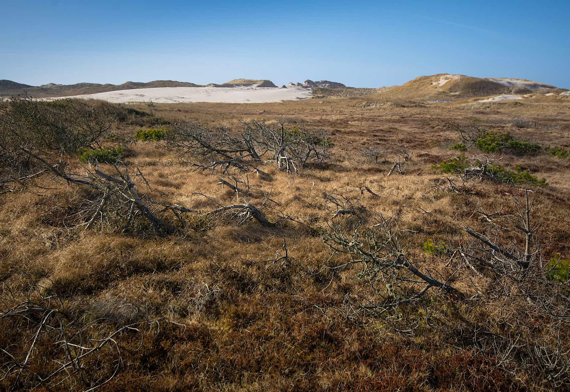Klitlandskab ved Husby, vest for klitplantagen (foto: Rune Engelbreth Larsen)