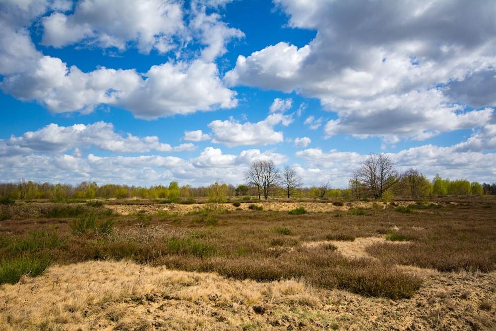 Karakteristisk landskab i Döberitzer Heide (foto: Rune Engelbreth Larsen)