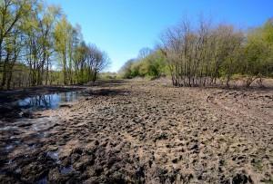 Her fodres Hellebæk Kohaves kreaturer om vinteren i hvad der har udviklet sig til en kæmpe pøl af mudder og afføring i et naturbeskyttet område i en nationalpark – det er ikke kønt, og det lugter fælt (foto: Rune Engelbreth Larsen)