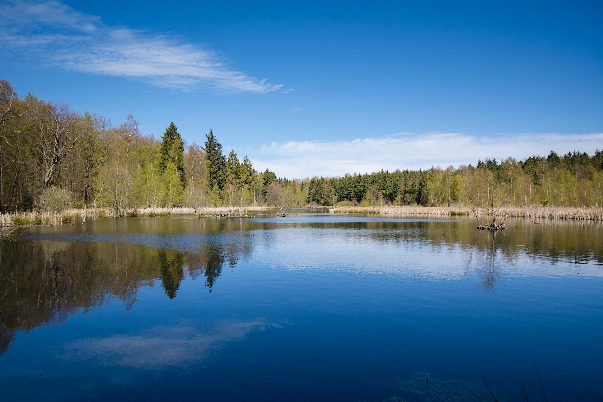 Genoprettet Sø i Klosterris Hegn (foto: Rune Engelbreth Larsen)
