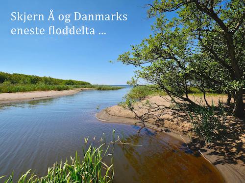 Skjern Å og Danmarks eneste floddelta ...