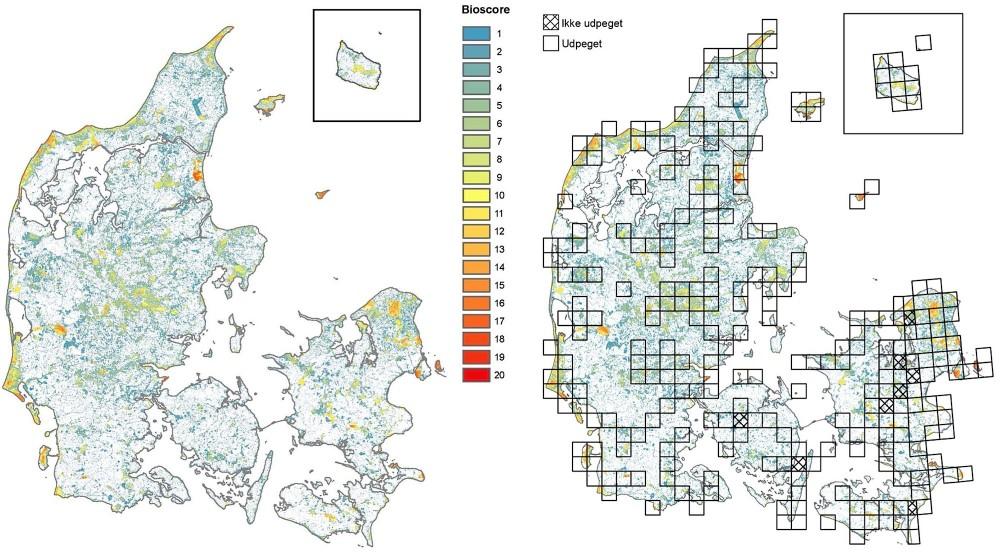 Et samarbejde mellem Københavns og Aarhus Universitet har indkredset, hvor vi bedst kan beskytte arterne, hvis halvdelen af de danske naturarealer på land udpeges til en målrettet indsats (kilde: Biodiversitetskort for Danmark)