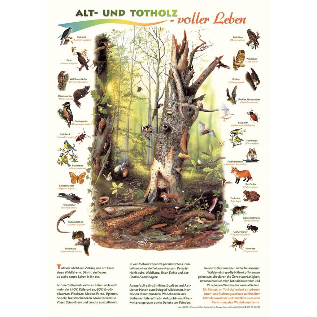 »Gammelt og dødt ved – fuldt at liv« Så lærerigt og farverigt kan gamle og døde træers afgørende betydning for livet i skovene formidles i Tyskland ved en urørt skov