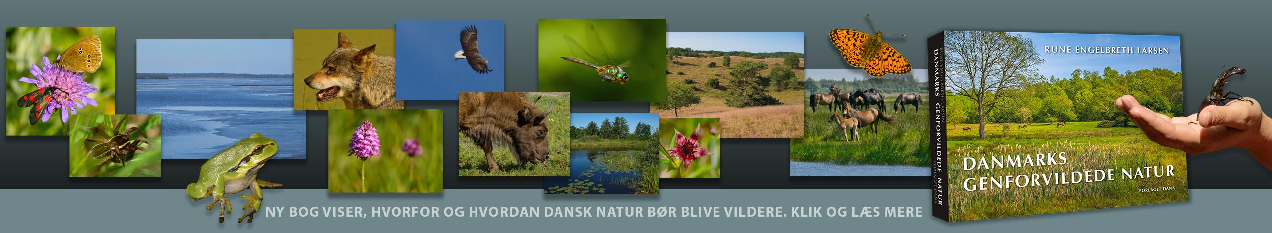Danmarks genforvildede natur – ny bog af Rune Engelbreth Larsen