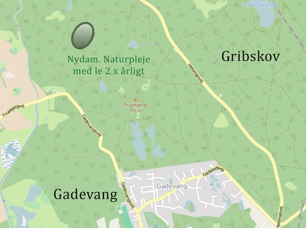 Nydam – et område i Gribskov, hvor der slås med le to gange årligt