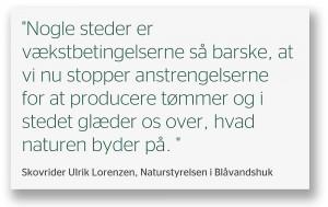 »Nogle steder er vækstbetingelserne så barske, at vi nu stopper anstrengelserne for at producere tømmer og i stedet glæder os over, hvad naturen byder på,« udtaler skovrider Ulrik Lorenzen, Naturstyrelsen i Blåvandshuk.
