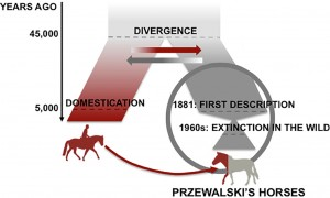 For ca. 45.000 år siden adskiltes przewalski-hesten fra den hest, der er blevet til vor tids tamheste (Sarkissian, C.D. m.fl. 2015: »Evolutionary Genomics and Conservation of the Endangered Przewalski's Horse«)