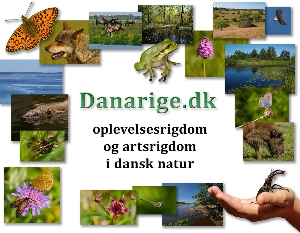 Hold Danarige.dk i luften og få flere gratis ord og billeder