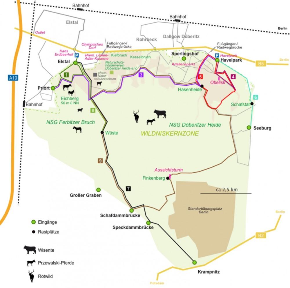 FIND VEJ: Kort over Döberitzer Heide. Tag med regionaltoget S7 fra Berlin Hbf i retning af Potsdam Hbf og stå af i Elstal (eventuelt Dallgow-Döberitz) – det tager kun 24 minutter og koster kun 3,40 € for en enkeltbillet. Derefter er der en gåtur til Döberitzer Heide på godt og vel 2 kilometer (der kører dog også en bus fra stationen, hvis du er heldig og ankommer på passende tidspunkt). Hvis du 'blot' vil gå lidt af turen, er det anbefalelsesværdigt at gå imod uret (altså mod syd fra indgangen ved Elstal), for så når du hurtigst ned til udsigtspunktet ved den store slette (der hedder 'Wüste', skønt det egentlig betyder »ørken«), og her er størst sandsynlighed for at se bisoner og vildheste (husk en kikkert). Download kortet som pdf-fil.