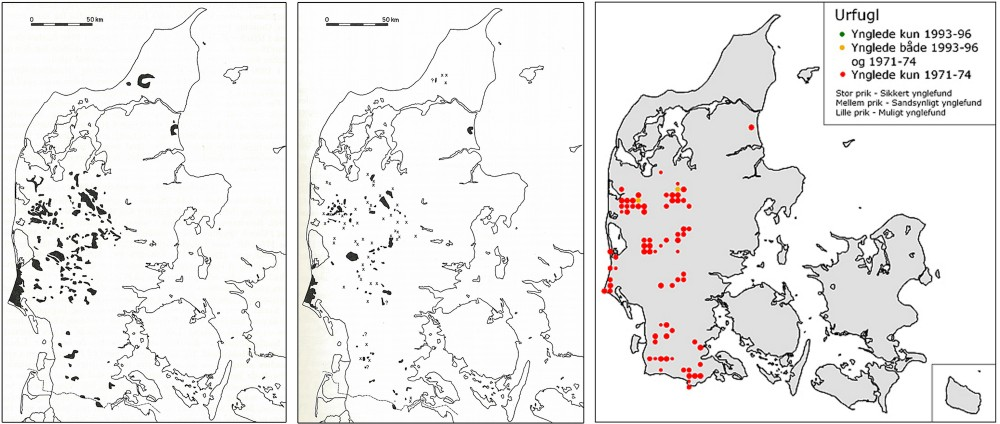 Urfuglens afdansningsbal i 1900-tallet. Fra venstre: 1) Urfugleterræner 1930-1942 (jf. Joensen 1967, primært baseret på Westerskovs 'Urfuglen', 1943), 2) urfugleterræner 1966 (jf. Joensen 1967), 3) ynglende urfugle fra 1970'erne til 1990'erne (opgjort ud fra DOFs landsdækkende kortlægninger i 1971-74 og 1993-96, jf. DOFbasen.dk)